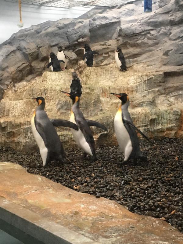 変換 ~ ペンギン