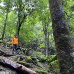 地図を見ながら森を歩く